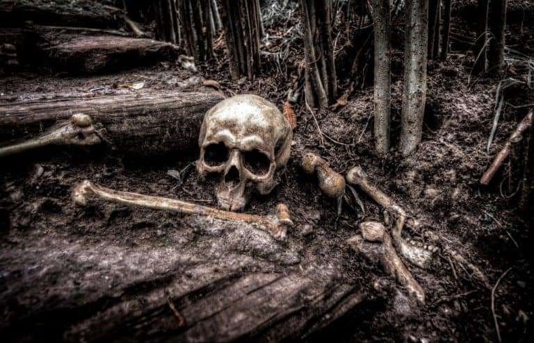 picture of a skull and other bones in a forest